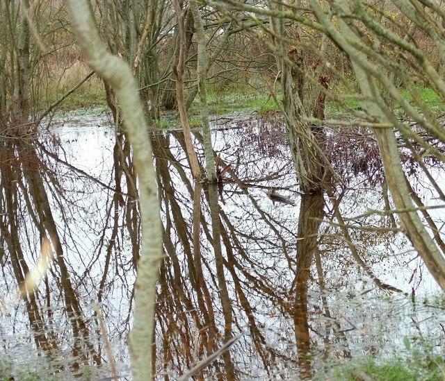 Pond amid trees, Nightingale Park