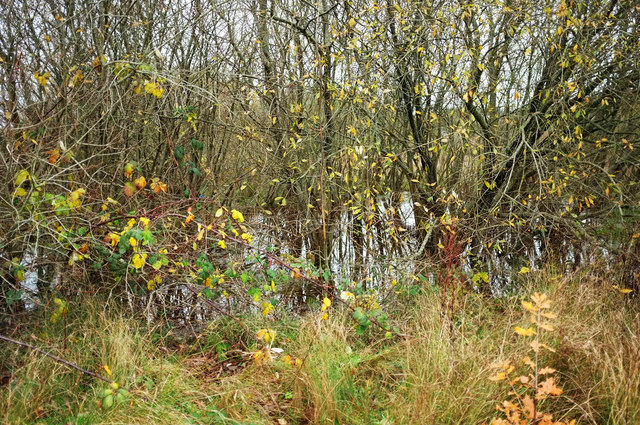 Trees around pond, Nightingale Park