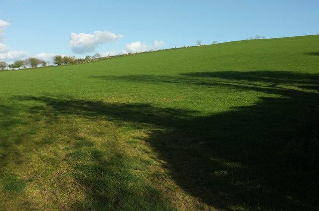 Sheep pasture near Marsh Farm