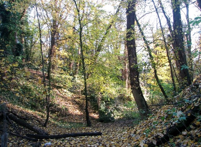 Autumn colours in Danby Wood
