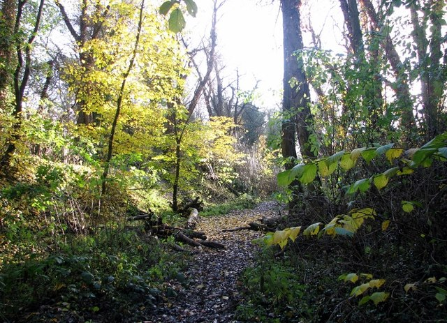 A path in Danby Wood