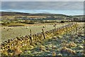 SD9590 : Dry stone wall, Askrigg Bottoms by Mick Garratt