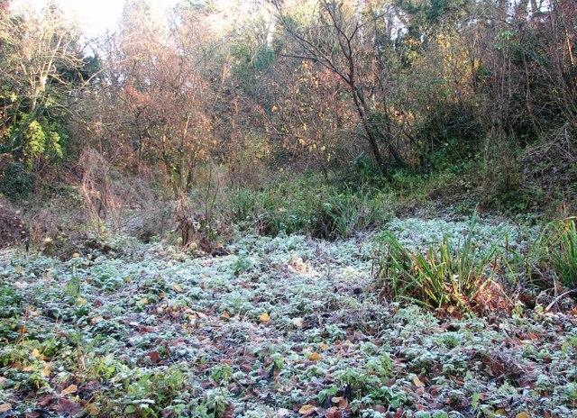 Frosty morning in Danby Wood