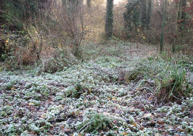 A patch of frost in Danby Wood