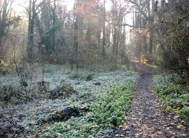 A frosty morning in Danby Wood