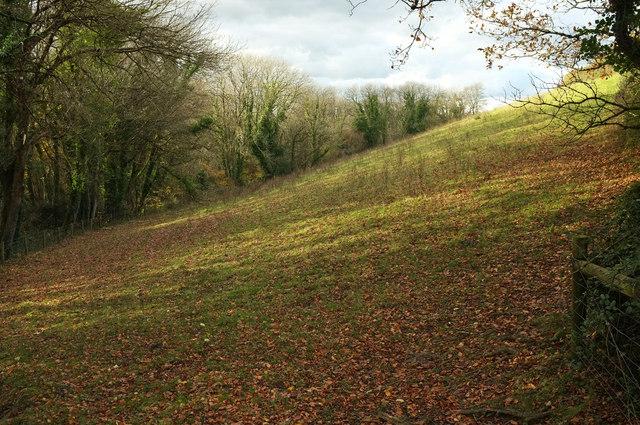 Meadow by Tennacott Lane