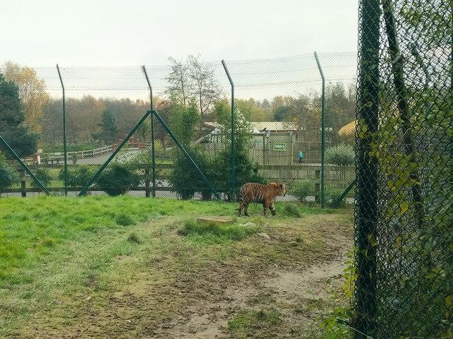Tiger enclosure, Fota Wildlife Park