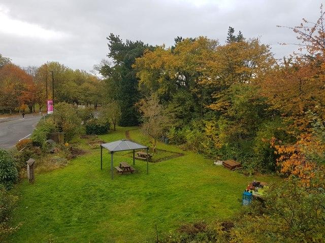 Ron Weir's Garden