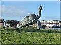 NZ3668 : Tortoise triumphant by Oliver Dixon