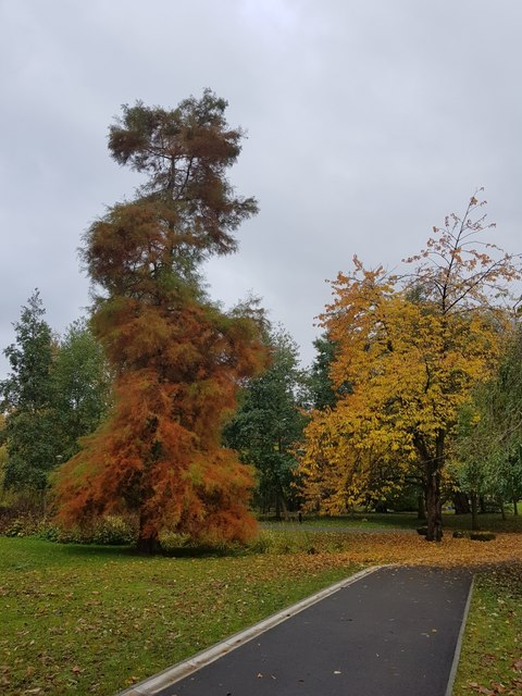 Autumnal colours on campus