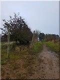 SE6451 : Path to Grimston Bar by DS Pugh