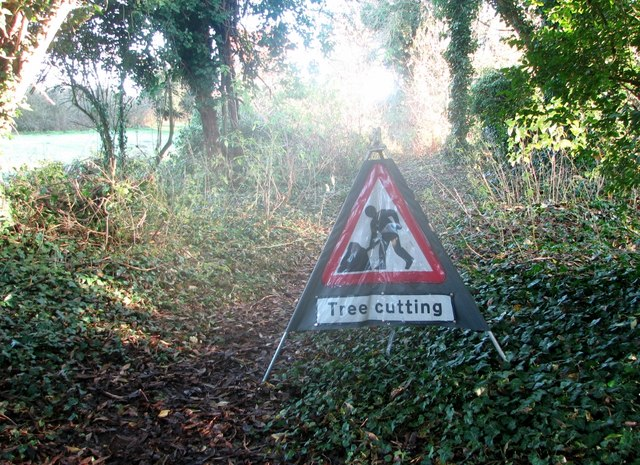 Beware of tree cutting