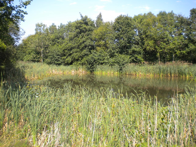 Pond in the woods, Severn Valley Country Park (1)