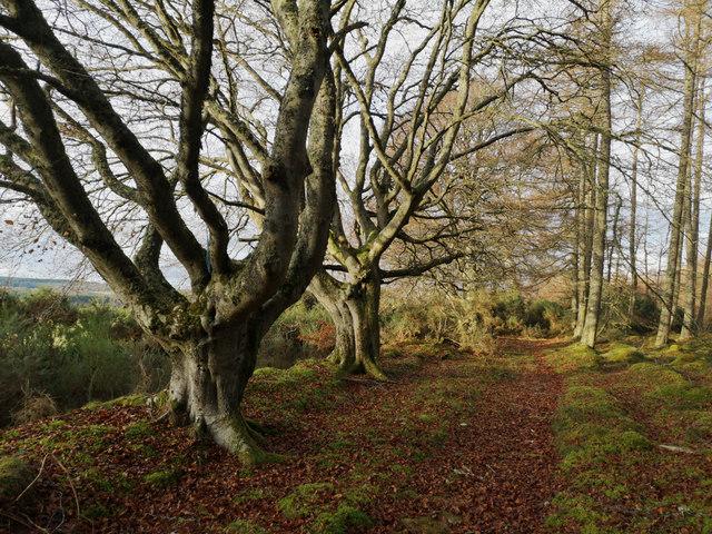 Track in Bogallan Wood