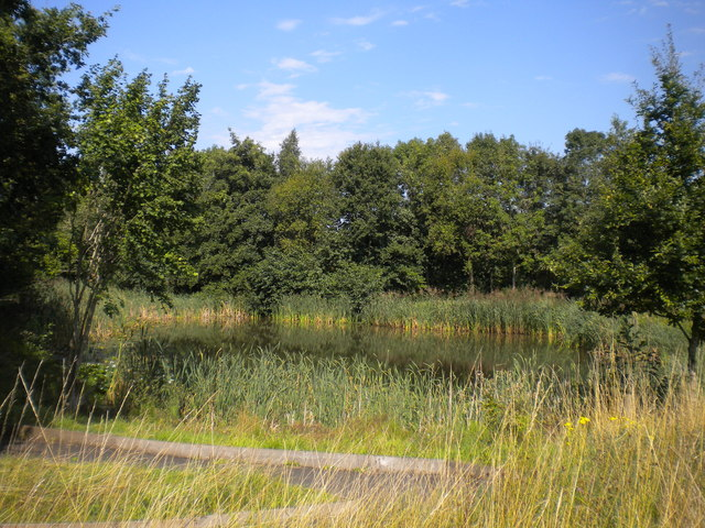 Pond in the woods, Severn Valley Country Park (2)