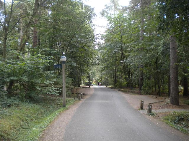 Internal roadway, Center Parcs Sherwood Forest (1)