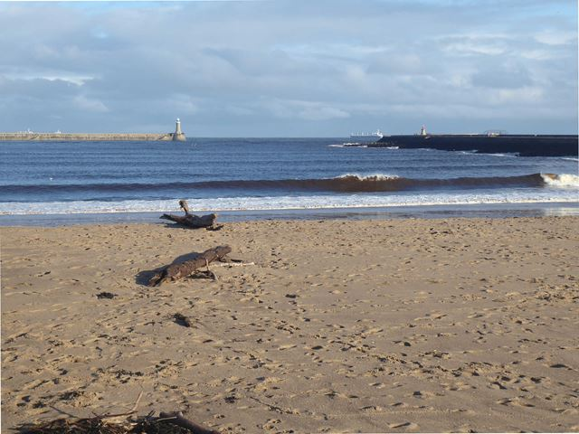 Little haven beach and the mouth of the Tyne
