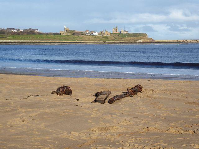 Driftwood on Littlehaven beach