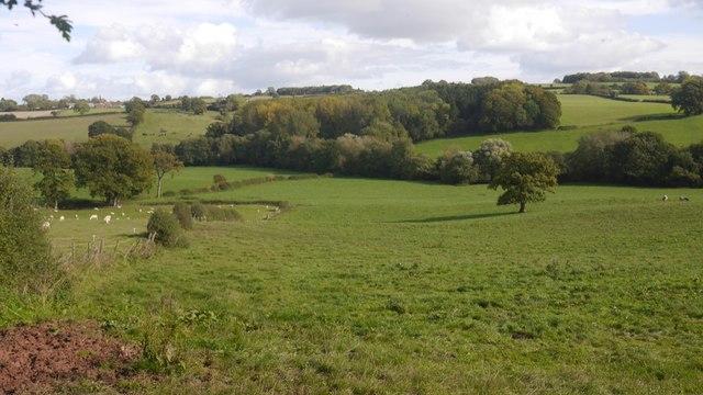 Grassland, Edvin Loach