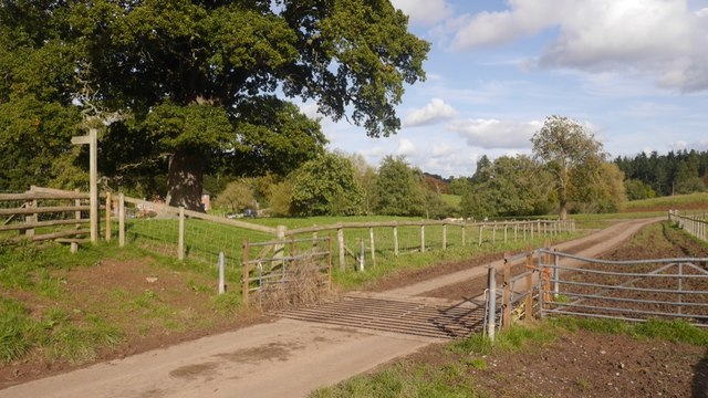 Cattle grid, Whitbourne