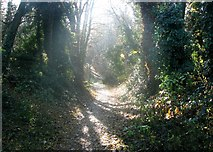 TG2105 : Path in Danby Wood by Evelyn Simak