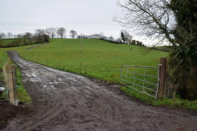 A muddy lane, Rarone