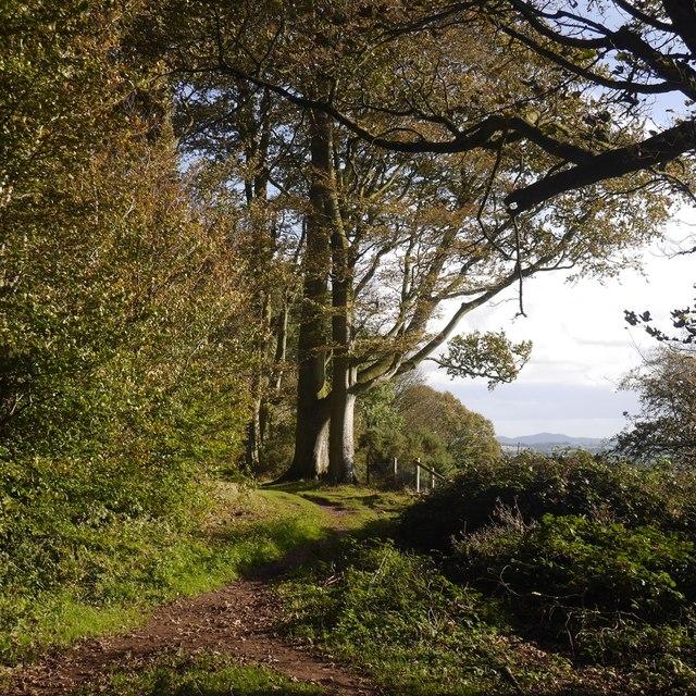 Edge of Warren Wood