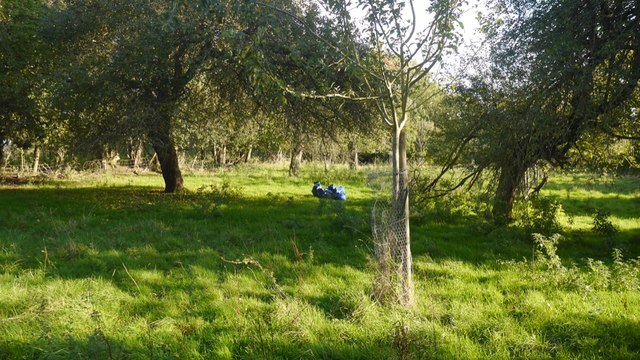 Orchard, Burley