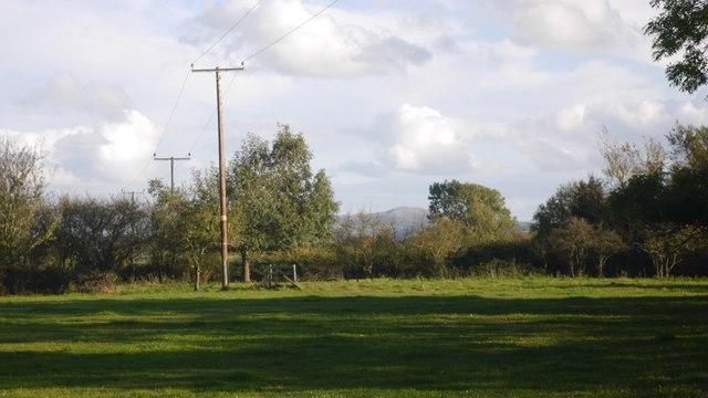Grassland, Burley