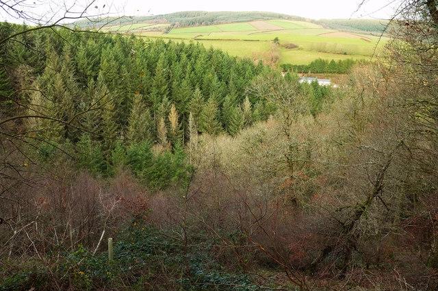 Plantations near Newcombe Farm