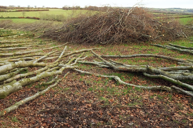 Branches and brushwood, Goosemoor