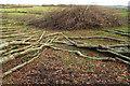 SS9535 : Branches and brushwood, Goosemoor by Derek Harper