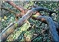 TG2105 : Dead trees in Danby Wood by Evelyn Simak
