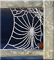 NT5934 : A spider's web at Bemersyde by Walter Baxter