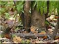 SK6465 : Rufford Abbey Country Park – bird feeding area – 11 by Alan Murray-Rust