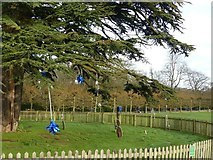 SK6464 : Tinsel in the cedar tree by Alan Murray-Rust