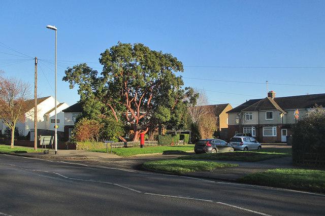 Mowbray Road: winter sunlight