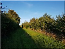 SE6350 : Between hedgerows by DS Pugh