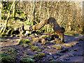 SD6973 : The Money Tree, Ingleton Waterfalls Trail by David Dixon
