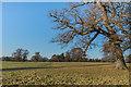 SJ5409 : Parkland, Attingham Park by Ian Capper
