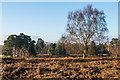 SJ5510 : Deer park, Attingham Park by Ian Capper
