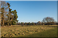 SJ5509 : Deer park, Attingham Park by Ian Capper