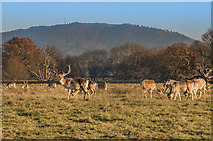SJ5509 : Deer park, Attingham Park by Ian Capper