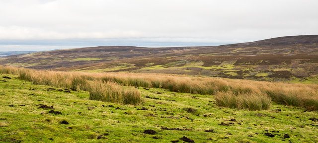 Rough grazing with rushes above Burn Hope