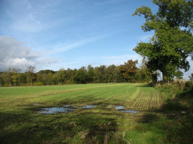 Field and wood near Whitrigg Farm