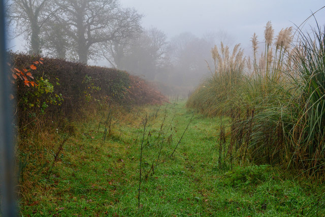 Newton St Cyres : Grassy Track