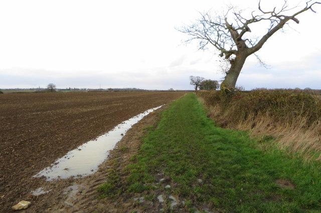 A soggy Swan's Way