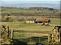 NZ0710 : Fields west of Barningham by Gordon Hatton