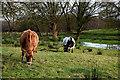 H4269 : Cattle grazing, Creevangar by Kenneth  Allen