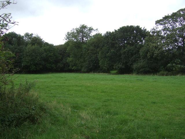 Grassland towards Whites Road